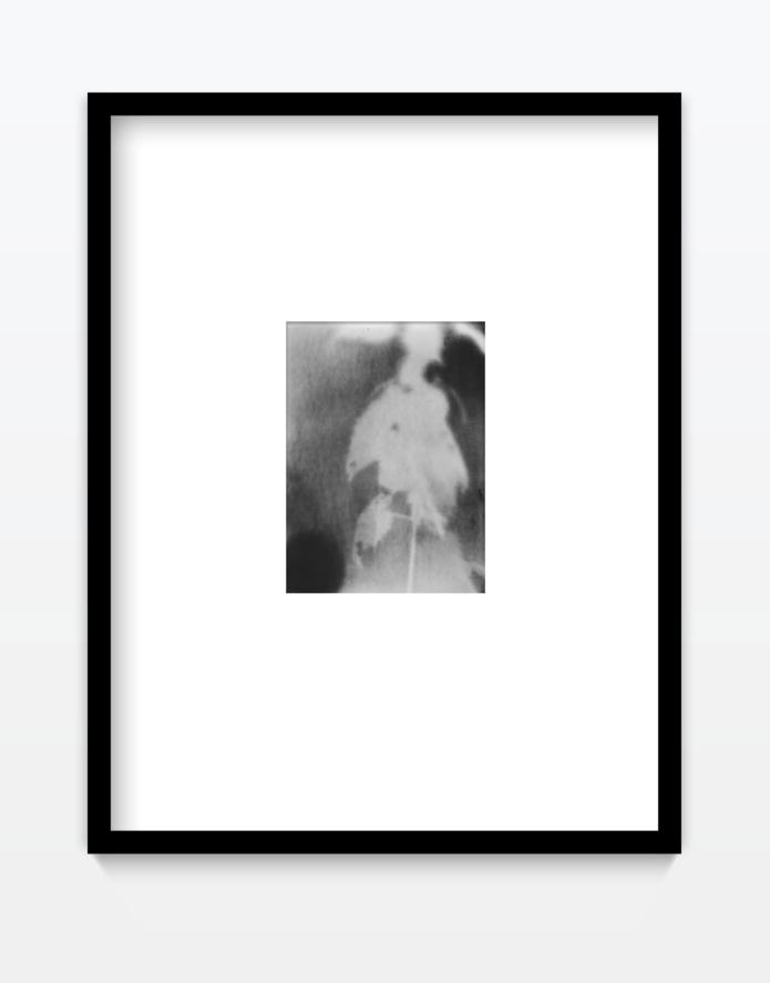 Emslander julia leaves fotogramm gregor hildebrandt muenchen youngartist
